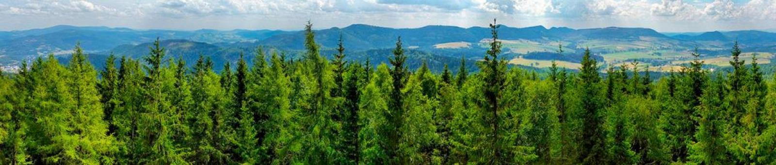 Энергия из недр леса